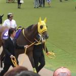 マイネイサベル馬の画像!