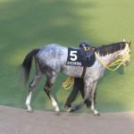 エイシンサクセスの馬の画像!東京競馬場にて!