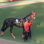 ムクドク!東京競馬場にて!馬の画像シリーズ!