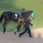 プレイ馬の画像!東京競馬場にて!