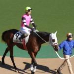 ヒロスマイルの馬の画像!東京競馬場にて!