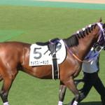 オメガスパーキング!東京競馬場にて!馬の画像シリーズ