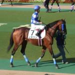 ノボクン!東京競馬場にて!馬の画像シリーズ