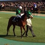 馬の写真・競走馬画像・カクシアジ号・ヒヤシンスステークス