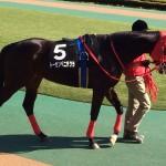 競走馬画像!トーセンベニザクラ号。