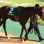 サイモントルナーレ号・競走馬画像