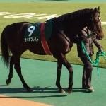 セイカプレスト号・競走馬画像