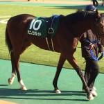 タニノエポレット号・競走馬画像
