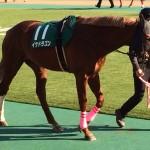 イケドラゴン号、競走馬画像