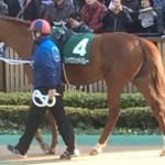 セイクリットバレー号。競走馬画像