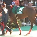 メイショウジンム号!競走馬画像