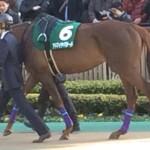 アドマイヤバラード号、競走馬画像。東京競馬場にて