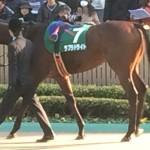 ラブラドライト号!競走馬画像