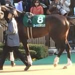ロードオブザリング号。競走馬画像