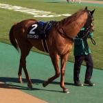 ランウェイワルツ号・馬の写真