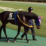 武豊騎手・メイショウシンシア号・競走馬画像