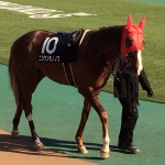 馬の写真・岩田騎手とニシケンモノノフ号