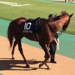 ダイワストリーム号・競走馬画像