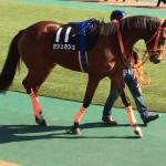 カシュカシュ号・競走馬画像