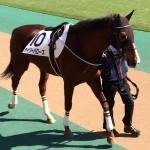 デイジーバローズ号・馬の写真