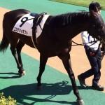 馬の写真・コスモマイギフト号