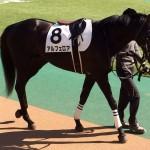 競走馬画像・アルフェロア号