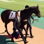 アプリコーゼ・馬の写真