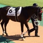 フォーナインキング号・馬の写真
