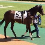 セカイノカナ号・馬の写真
