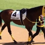 ウェルウィッチア号・馬の写真