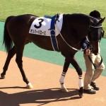オリバーバローズ号・馬の写真