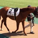 メイラード号・馬の写真