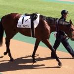 ヘイローフォンテン号・馬の画像