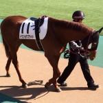 トウショウプライド号・馬の写真
