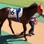 トキノユウ号・競走馬画像