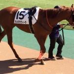 オメガラヴィータ号・馬の写真