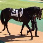 ピースオブウィーク号・競走馬画像です