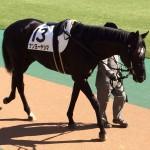 ナンヨーヤシマ・馬の写真