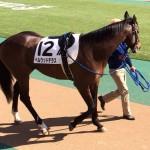 ベルウッドテラス・競走馬画像