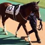 デイジーバローズ・馬の写真