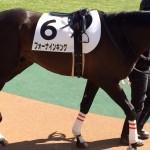 フォーナイキング・競走馬画像です