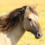 種牡馬リーディングサイアー・2001年