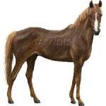 ハープスター号・牝馬クラシック第1弾でまず1冠は確実か