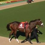 三冠牝馬・アパパネ号の画像