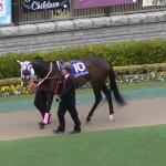 ワンダーアキュート号・競走馬画像