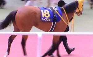 ハープスター・馬の写真