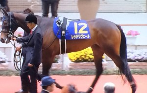 レッドリヴェール・競走馬画像