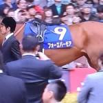 フォーエバーモア・馬の写真