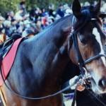 ワンアンドオンリー・競走馬画像