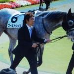 ゴールドシップ・馬の写真